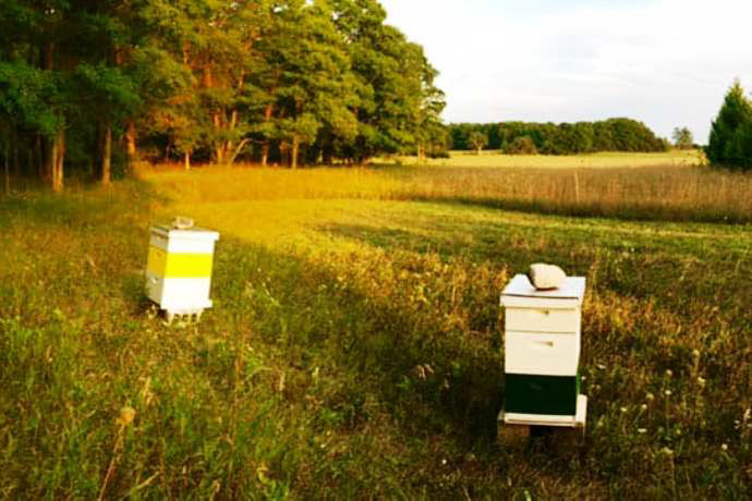 Apiary Bee Hives