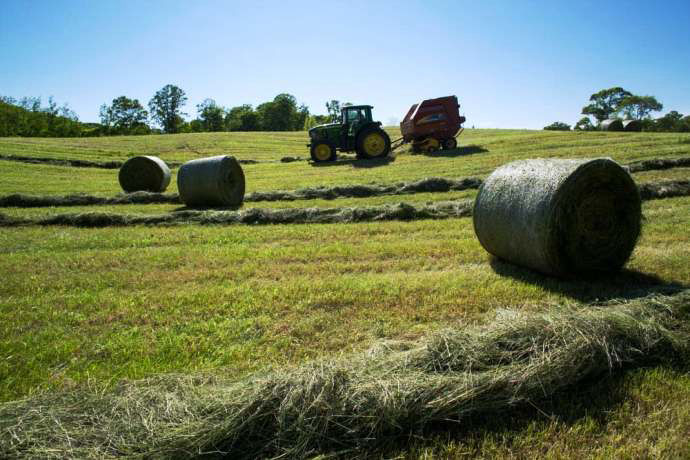 Hay making for grass fed beef